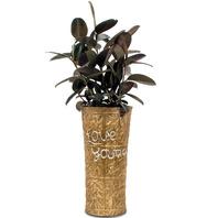 멜라닌 고무나무(지역별)